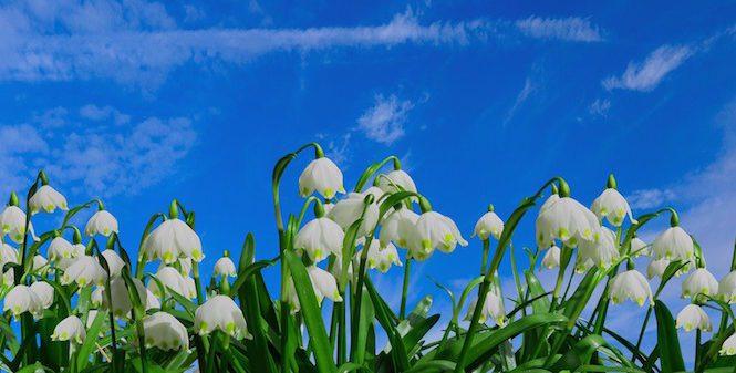 spring at legacies